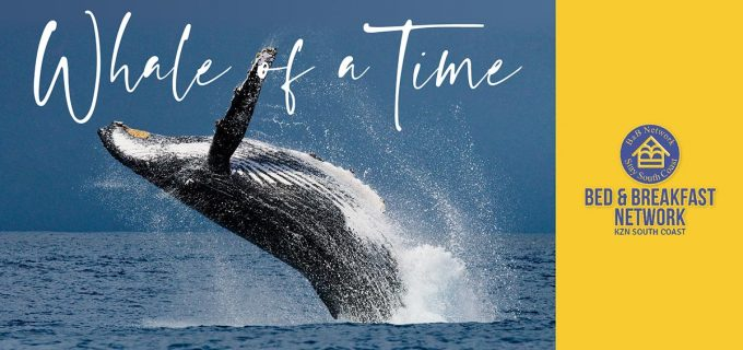 Whale Watching South Africa, Hump Back Whale Migration