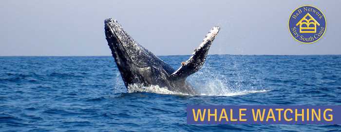 South Coast KZN - Whale Watching