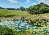 River Valley Nature Reserve Margate Uvongo South Coast